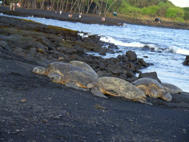 Sea turtles. So peaceful. So grand.